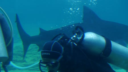 requins : Shark passant Scuba Divers