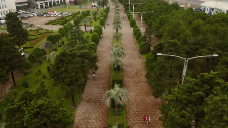 Palm trees in Batumi, aerial shot from above
