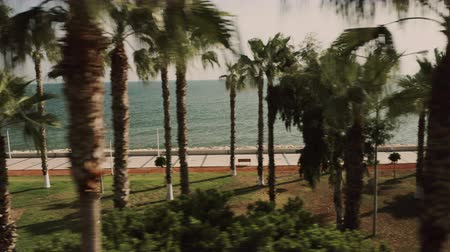 The coast of the Mediterranean Sea. Palm drone shooting Stock Footage