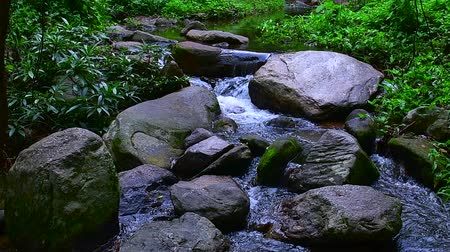 poz : Slow motion video of water flowing in Doi Suthep Pui national park, Thailand.