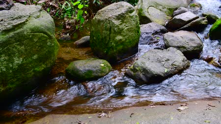 tajlandia : 4K video of water flowing in Doi Suthep Pui national park, Thailand.