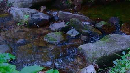 pui : Slow motion of water flowing in Doi Suthep Pui national park, Thailand.