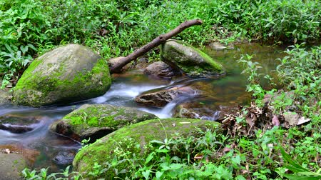 pui : Time lapse of water flowing in Doi Suthep Pui national park, Thailand.