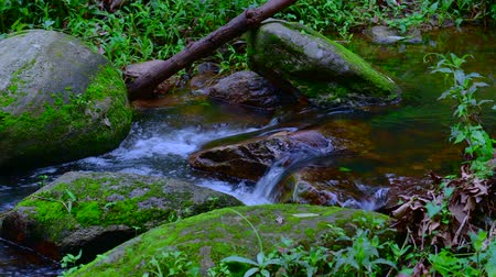 pui : 4K video of water flowing in Doi Suthep Pui national park