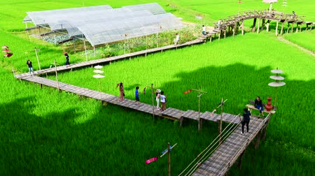 nan : 4K time lapse video of rice field at Si Mongkol temple, Thailand.