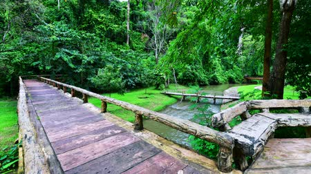 wooden bridge : 4K time lapse video of Phu Sang national park, Thailand.