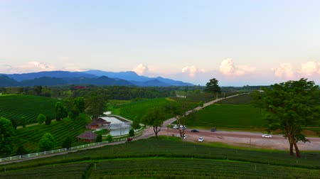 4K time lapse video of tea plantation in Chiang Rai province, Thailand.