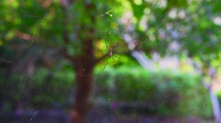 паук : 4K video of spider in the nature, Thailand.