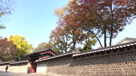 wall building feature : Fall Foliage at Jeongdong-Gil in Seoul City, South Korea