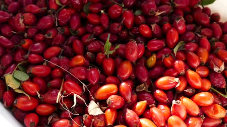 rosehip : natural rosehip, ripe rosehips collected to make rosehip tea.