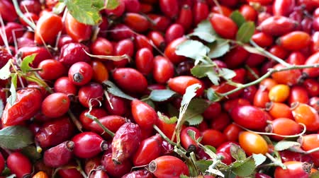 rosehips : natural rosehip, ripe rosehips collected to make rosehip tea