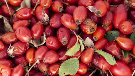 rosehip : close-up ripe rosehip fruit, ripe marmalade to be made