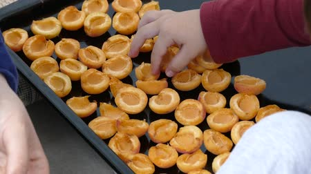 apricots left to dry in the tray.
