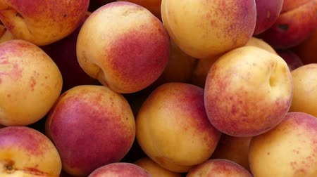 organic red colored apricots, ripe apricots, natural apricot fruit. Stock mozgókép