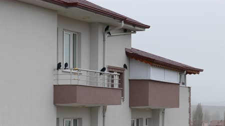 korumak : crows, rain and crows protected on the balcony in the rain Stok Video
