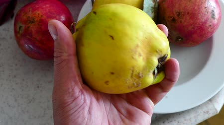 pigwa : a man is turning the quince fruit in his hand Wideo