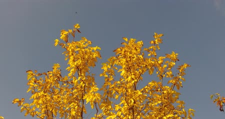 frondoso : yellowed leaves in autumn trees, cloudy sky and yellowed leafy trees in autumn