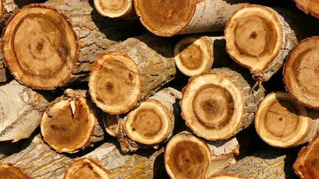 piled up : cut poplar trees, cut poplar trees for timber, lumber trade, poplar timber for construction,