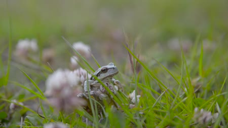 сокрытие : A frog standing on a stone in the grassland