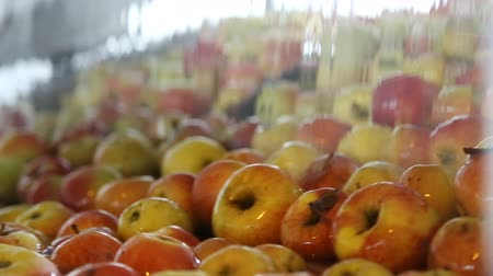 macrobiotic : Apples on a sorting table in a warehouse Stock Footage