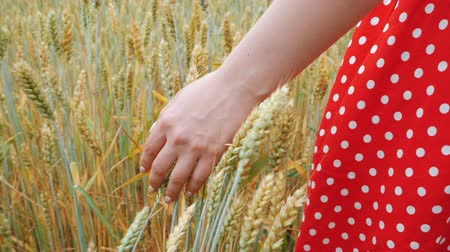 grain bread : Woman in retro red dress with beautiful nails from back to viewer in field of gold wheat touched by the hand of spikes in natural light. Slow motion. Rich harvest concept.