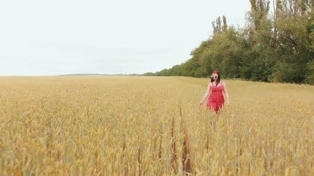 hair growth : Beautiful girl in red retro dress running in golden field. Freedom concept. Happy woman having fun outdoors. Harvest, agriculture concept. Aerial flight over wheat field
