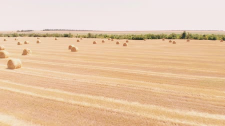 palheiro : Rural field in summer with bales of hay. Aerial view rolls haystacks straw on field, after harvesting wheat. Landscape of Ukraine. Drone footage. Camera backward movement