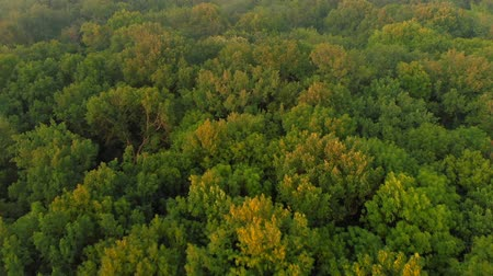 forest preservation : Aerial view. Flying over beautiful green forest in wild nature landscape, Drone flies at summer season.