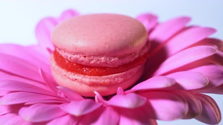 konfekció : Pink macaroon - delicious and beautiful french dessert rotating on gerbera flower on blue background. Cooking, food, baking, nature concept Stock mozgókép