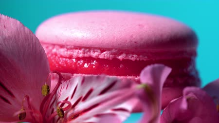 konfekció : Pink macaroon - delicious and beautiful french dessert rotating on gerbera flower on blue background. Cooking, food, baking, nature concept.