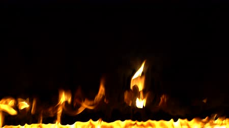 feroz : Burning trees. Fire in the forest. Close up. Catastrophe, problems, the concept of bonfire Vídeos