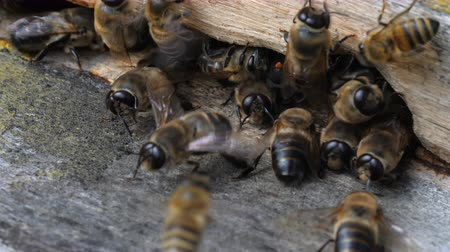 королева : Insects are at entrance to hive.Swarm of bees circle around hive.Apiary,beekeeping,collective work concept bee agriculture.Macro.