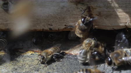 колония : Swarm of bees circle around hive.Apiary,beekeeping,collective work concept bee agriculture.Insects are at entrance to hive.Macro.