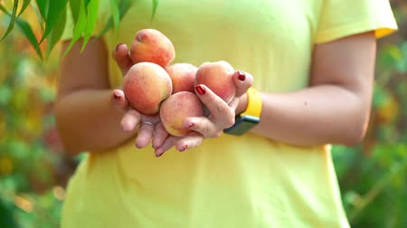 grande grupo de objetos : Woman holds lot of peaches in hands and they fall out from her. Harvest concept. Vitamins, healthy eating. Vídeos