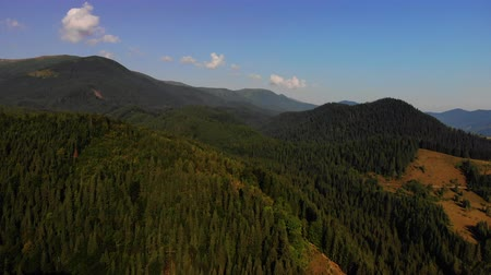 lucfenyő : Stunning view to mountain covered with pine trees from flying drone.Summer in Europe Carpathians.Concept of flight, nature, breathtaking beauty of our planet.