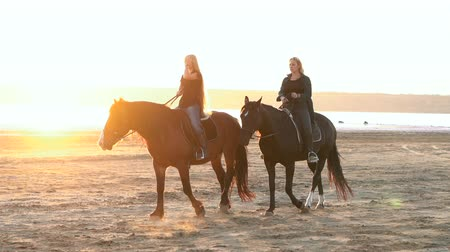 potro : View of women riding horses along the river in golden light sunset or sunrise. Stallion walking in desert by the water. Slow motion Vídeos