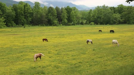 füstös : Pasture in Great Smoky Mountains NP, Tennessee Stock mozgókép