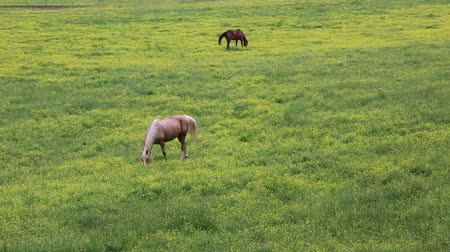 füstös : Horse on pasture, Tennessee