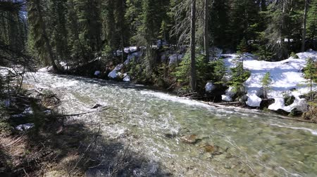 ingiliz columbia : The creek - Yoho NP, Canada Stok Video