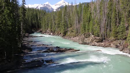 ingiliz columbia : Kicking Horse River, British Columbia, Canada Stok Video