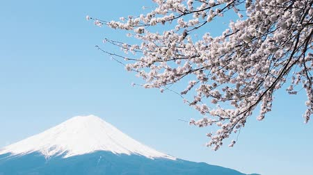 tájak : Mt. Fuji with cherry blossom