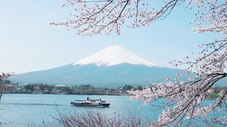 japan : Mt. Fuji with cherry blossom