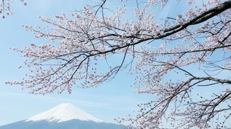 beautiful day : Mt. Fuji with cherry blossom
