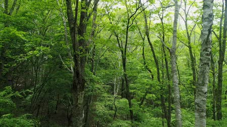 outside view : landscape of the forest Stock Footage