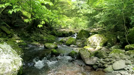 upstream : landscape of clear stream Stock Footage