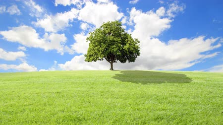 dub : green grass and tree with clouds running background.