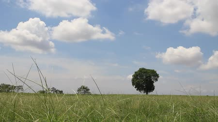 dub : tree in field,
