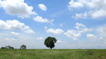 kopec : timelapse tree in field, clouds running and blue sky background. Dostupné videozáznamy