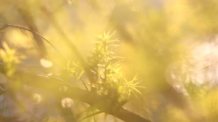 вектор : Green Leaves with sun light, selective focus