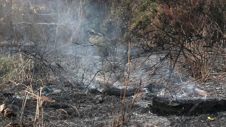 imha : Fire and smoke on dry grass and trees
